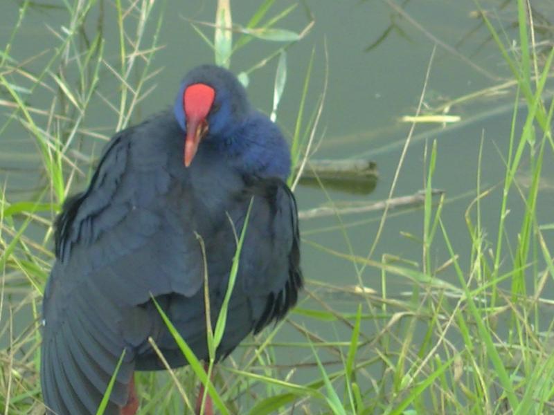 Corso di Birdwatching | Scirarindi